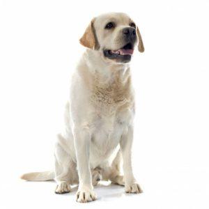 foto cane per non vedenti